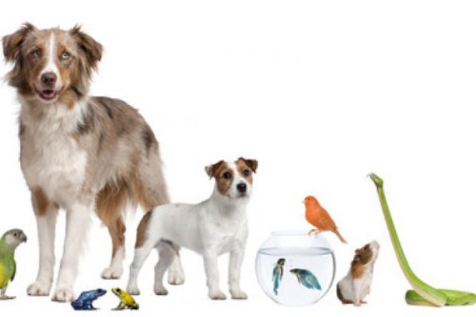 Ambitne plany Maxi Zoo. Sieć będzie liderem krajowego rynku sklepów zoologicznych?