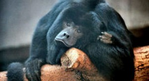 Małpka Express adoptowała kolejną małpkę