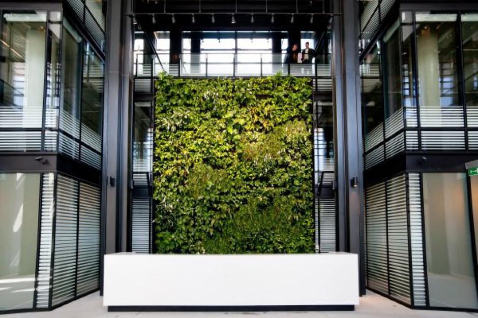 Pracownicy Eurocentrum stawiają na zielone otoczenie