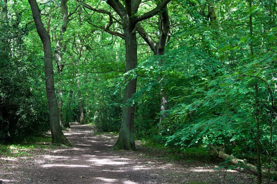 Będzie większa ochrona lasów przed sprzedażą