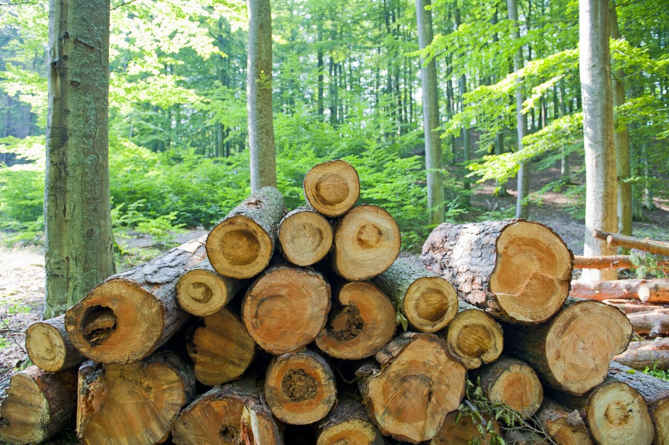 Fundusz nieruchomościowy Axa kupuje... lasy