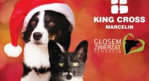 King Cross Marcelin pomaga bezdomnym zwierzętom