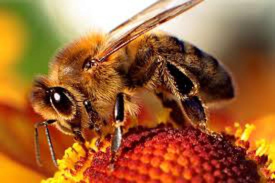 Galeria Wileńska dba o pszczoły