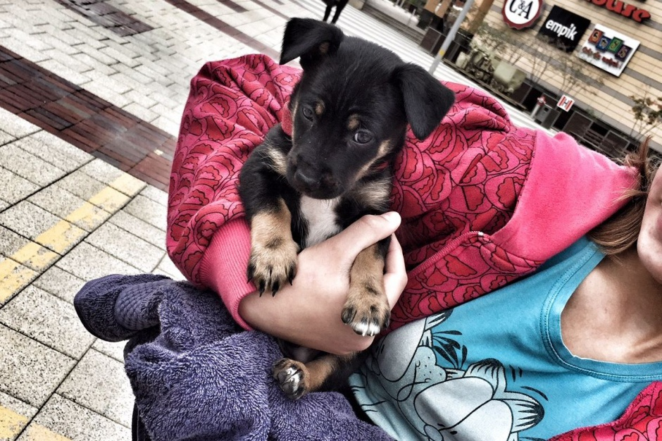 W Silesia City Center zrobisz zakupy z psem