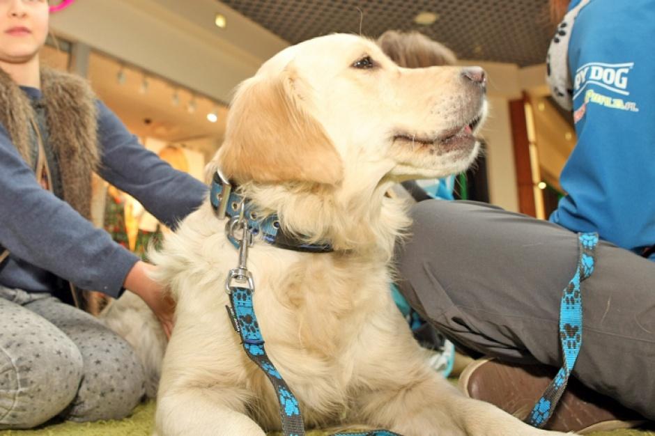 Rozmowy z psami w Galerii Gniezno