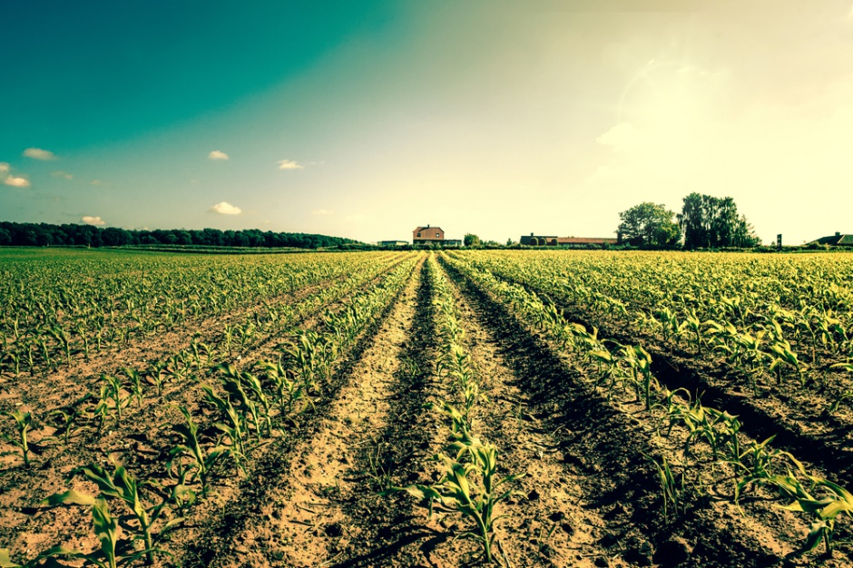 Jak nowa sytuacja prawna wpłynie na ceny nieruchomości rolnych
