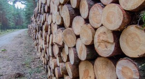 Wycinka drzew na prywatnych gruntach - na nowych zasadach