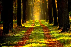 Lasy Państwowe mają pomysł na hotele