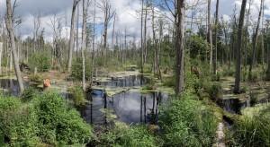 Zakaz wstępu do Puszczy Białowieskiej uderzy w branżę turystyczną
