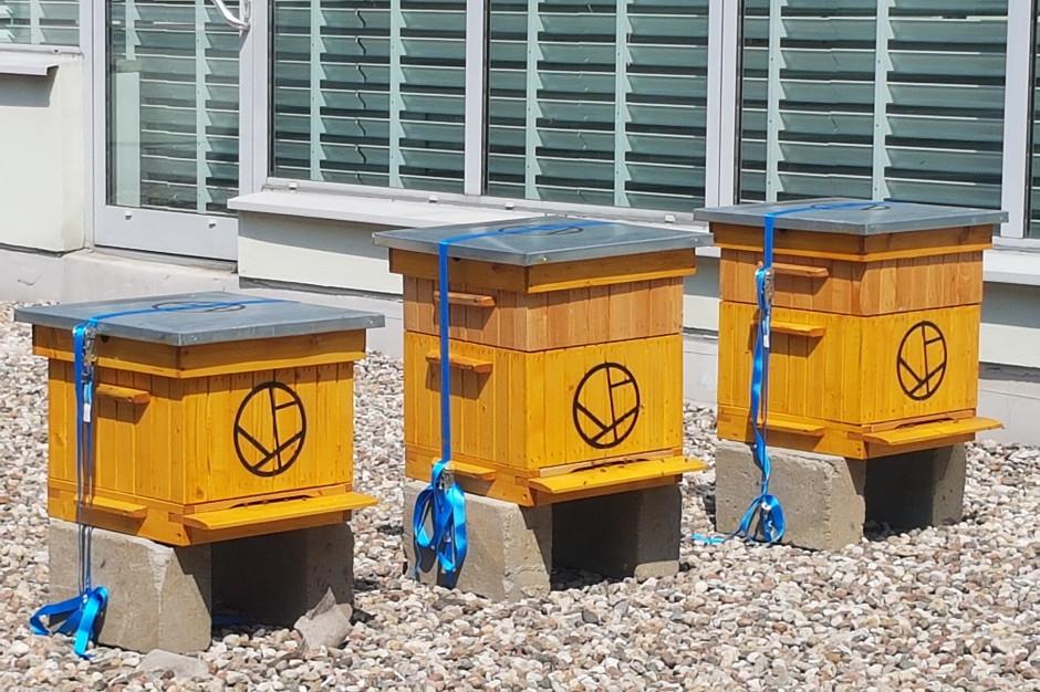 Pszczoły na dachu Galerii Madison