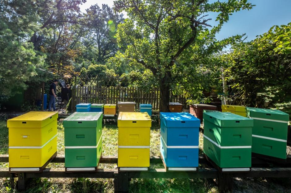AccorHotels ma pół miliona pszczół