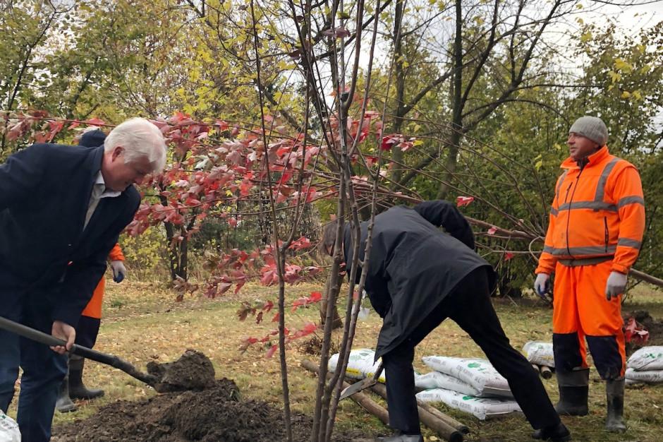EPP sadzi drzewa w zamian za wynajętą powierzchnię biurową w Parku Rozwoju