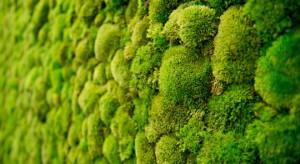 Energooszczędne nieruchomości z Zielonym Kredytem
