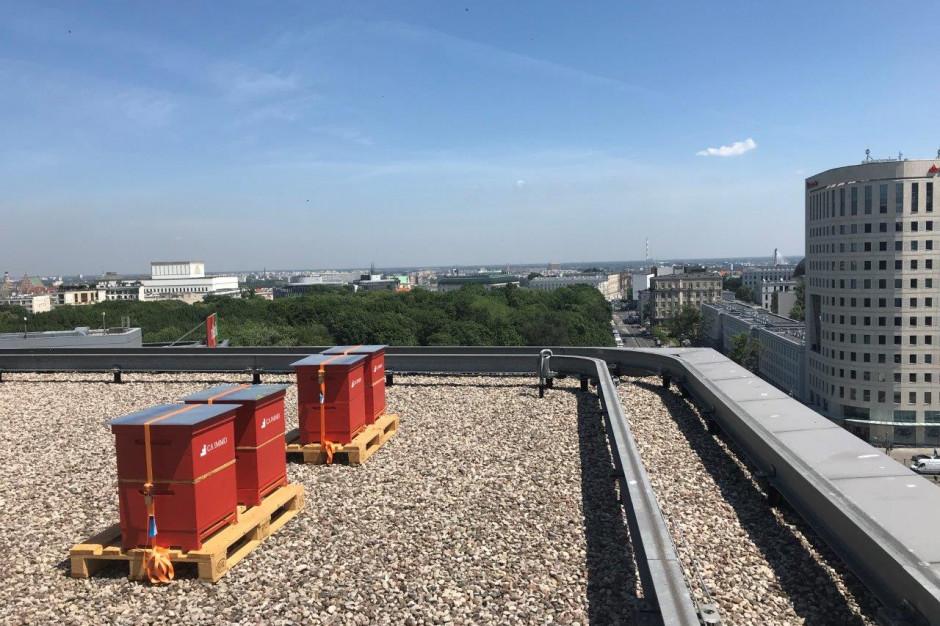 Miejska pasieka w centrum Warszawy - na dachu Saski Crescent