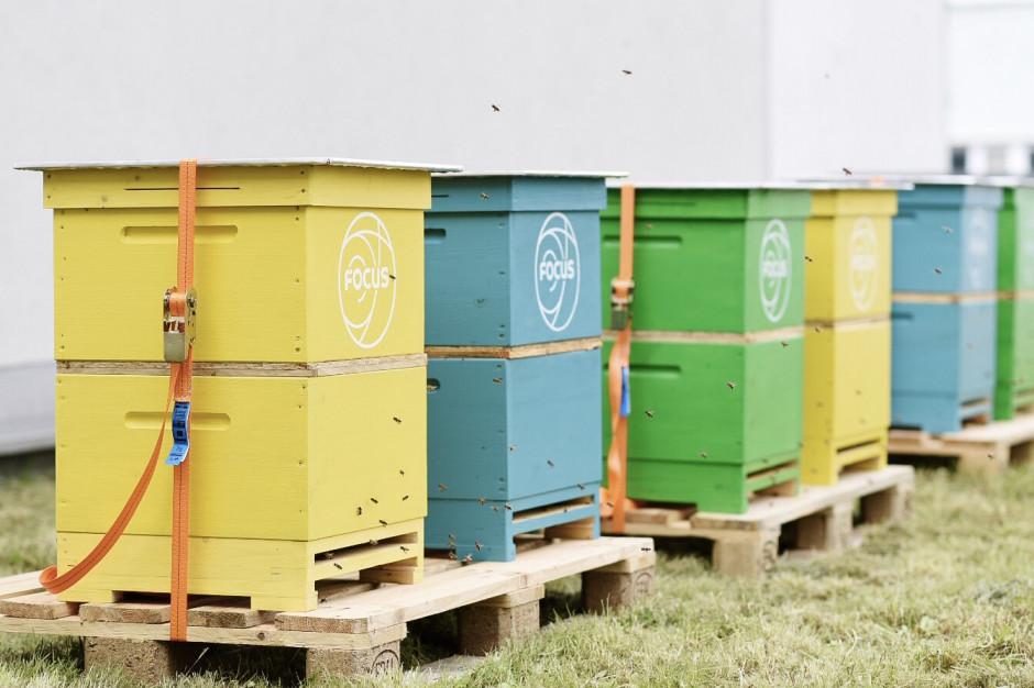 CH Focus w Bydgoszczy adoptuje pszczoły