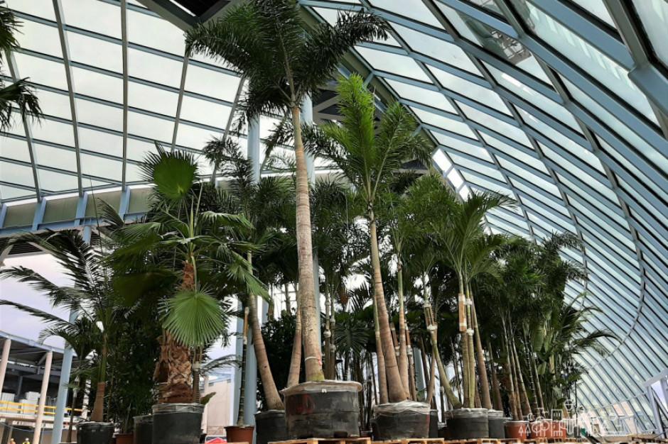 Pierwsze palmy i bungalowy pojawiły się w Park of Poland