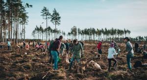 Proekologiczna akcja firmy Torus. 110 tysięcy drzew dla Nadleśnictwa Lipusz