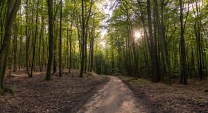 Lasy Państwowe na koronawirusie straciły już ponad 600 mln zł