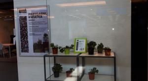 W Galerii Bronowice znowu można przygarnąć roślinę