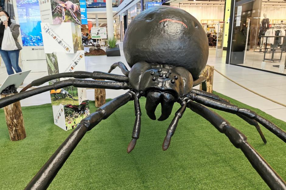 Atrakcje w Galerii Północnej. Wielkie owady i wystawa edukacyjna we współpracy z Lasami Państwowymi