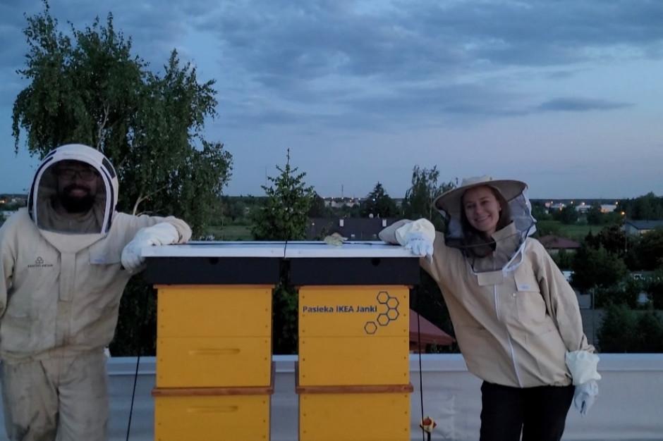 W Ikea Janki zamieszkały pszczoły. Klienci mogą je podglądać