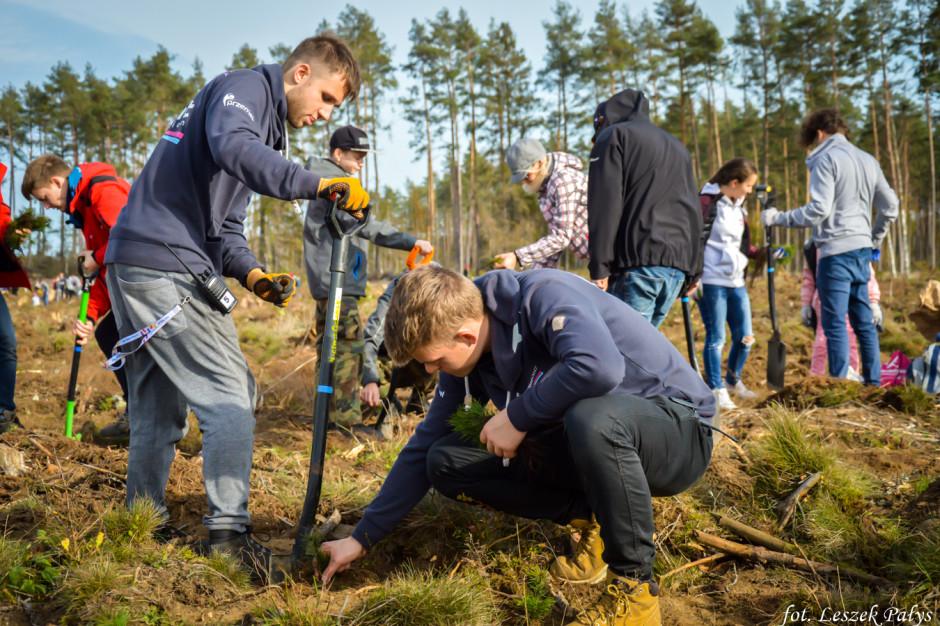 Łopata w łopatę, nie tylko na budowie. Euro Styl i Torus odtworzą zniszczony las